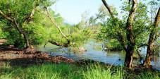 Mangroven an der Menjangan Insel, Westbali