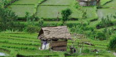Die berühmten Reisterrassen Balis