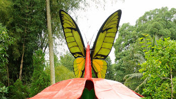 Figur eines Birdwing Schmetterlings