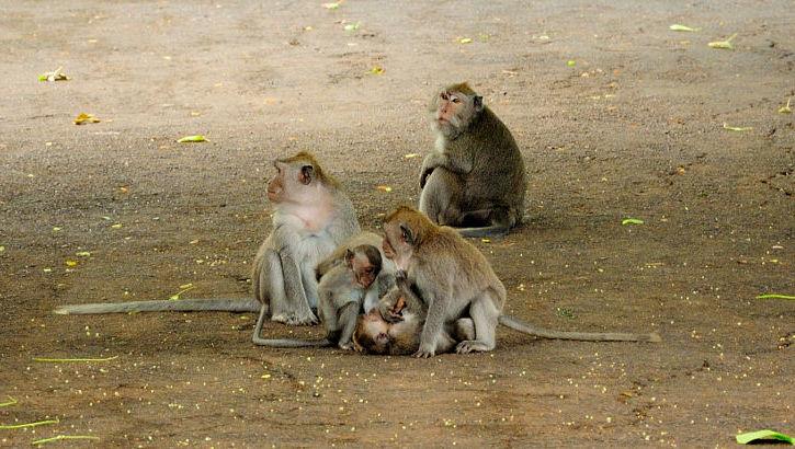 Affen im Affenwald von Ubud, Bali