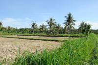 Hinterland von Amed, Bali