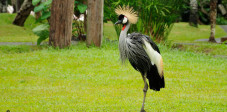 Der Bali Bird and Reptile Park