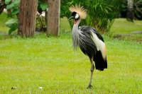 Tiere im Bali Bird and Reptile Park