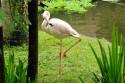 Flamingos im Bali Bird and Reptile Park