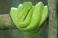 Schlange im Bali Bird and Reptile Park