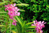 Blüten im Bali Orchid Garden in Denpasar, Bali