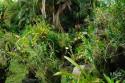 Dickicht im Bali Orchid Garden in Denpasar, Bali