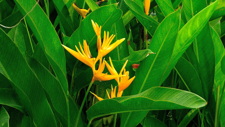 Der Bali Orchid Garden, Bali