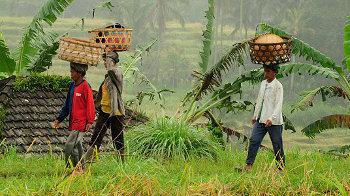 Arbeiterinnen auf Balis Reisterrassen