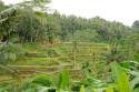 Die Umgebung von Mas, Bali