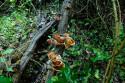 Totholz im Taman Nasional Bali Barat