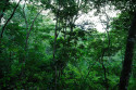 Dickicht im Taman Nasional Bali Barat