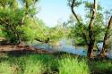Mangroven im Taman Nasional Bali Barat