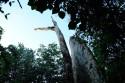 Toter Baum im Taman Nasional Bali Barat