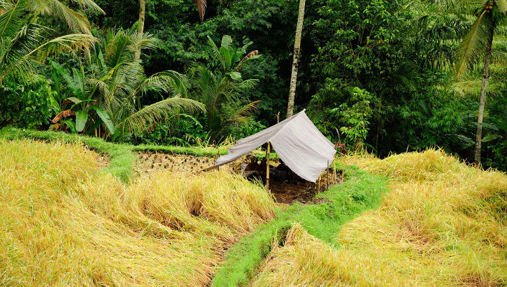 Reisfeld in Tabanan, Bali