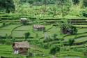 Reisterrasse bei Amed, Bali