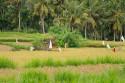 Reisterrasse bei Bangli, Bali