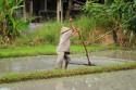 Vorbereiten der Reisterrassen Balis
