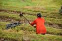 Umgraben der Reisterrassen Balis