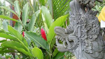 Die Sananda Bungalows in Balis Norden