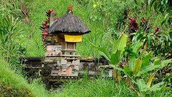 Schrein in Reisfeld auf Bali
