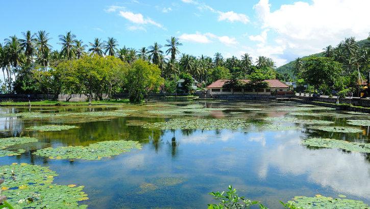 Seerosenteich in Candi Dasa, Bali