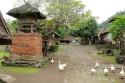 Hühner in Tenganan, Bali