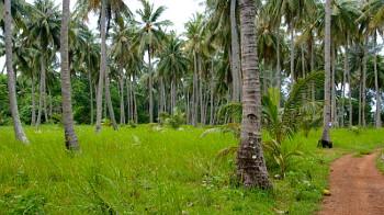 Wald auf den Karimunjawa Inseln