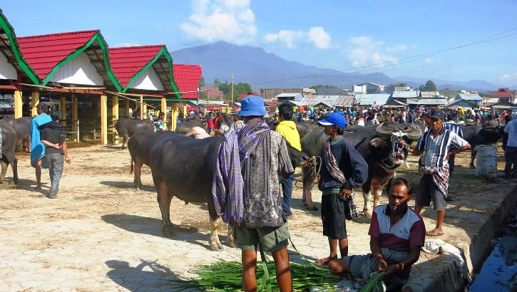 Viehmarkt der Tana Toraja, Sulawesi