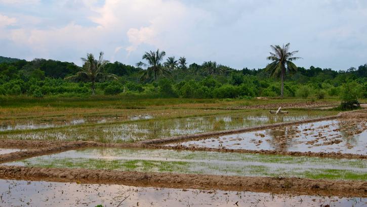 Reisfeld an Bahnstrecke auf Java, Indonesien