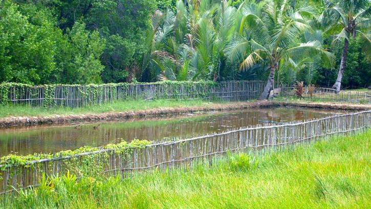 Reisfeld auf Java, Indonesien