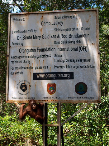 Orang Utan Foundation International