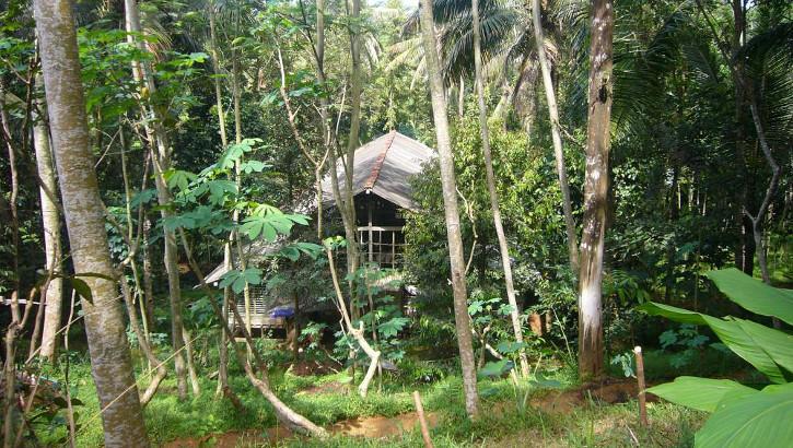 Haus im Urwald nähe Banyumas, Java, Indonesien