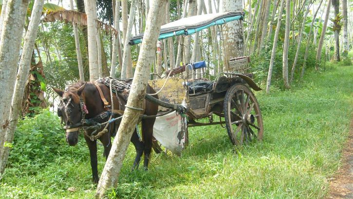 Pferdekutsche am Straßenrand, Zentraljava, Indonesien